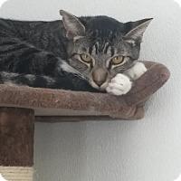Adopt A Pet :: Ki, Jr. - El Cajon, CA