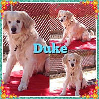 Adopt A Pet :: Duke - Santa Barbara, CA