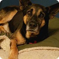 Adopt A Pet :: Gatsby (COURTESY 5-16-17) - Lovingston, VA