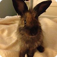 Adopt A Pet :: Athena - Los Angeles, CA