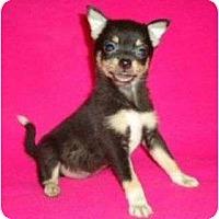 Adopt A Pet :: Geisha - Plainfield, CT