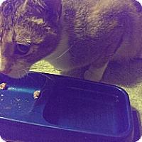 Adopt A Pet :: Princess - Oxford, CT
