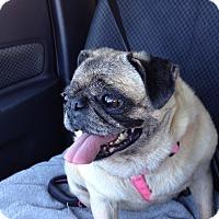Adopt A Pet :: Queenie - Jacksonville, FL