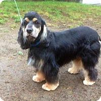 Adopt A Pet :: REESE - Tacoma, WA