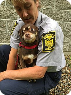 Chihuahua/Pug Mix Dog for adoption in Bloomfield, Connecticut - Maryn