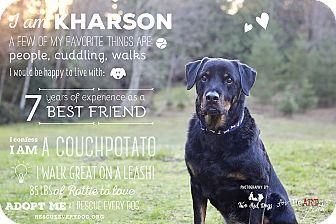 Rottweiler Dog for adoption in Seattle c/o Kingston 98346/ Washington State, Washington - Kharson