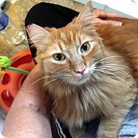 Adopt A Pet :: Sebastian - Las Vegas, NV