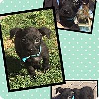 Adopt A Pet :: Kiersten - Scottsdale, AZ