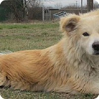 Adopt A Pet :: Misty - Pipe Creed, TX