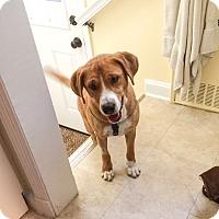 Adopt A Pet :: Georgi - Manhasset, NY