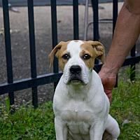 Adopt A Pet :: DJ - Homewood, AL