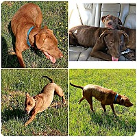 Adopt A Pet :: ROMO - Rootstown, OH