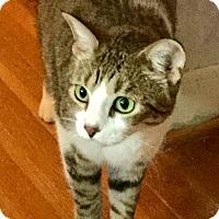 Adopt A Pet :: Munch - Houston, TX
