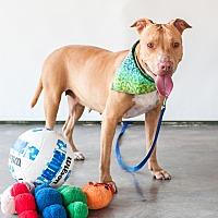 Adopt A Pet :: Gypsy - Victoria, BC