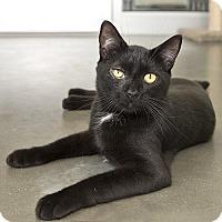 Adopt A Pet :: Johnny - Wilmington, DE