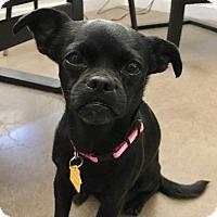 Adopt A Pet :: Olive - Chandler, AZ