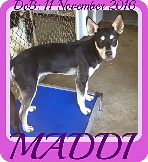 Husky Mix Dog for adoption in Jersey City, New Jersey - MADDI