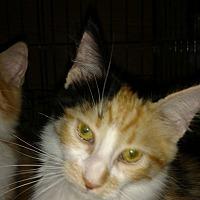 Adopt A Pet :: Jubilee - Rochester, MN