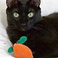 Adopt A Pet :: Henrick - St Louis, MO