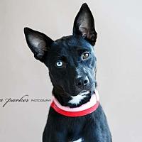 Adopt A Pet :: Mystic - Marietta, GA