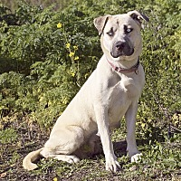 Adopt A Pet :: Bella - Monterey, CA