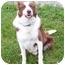 Photo 3 - Border Collie Mix Dog for adoption in Florence, Indiana - Nash