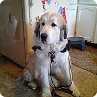 Adopt A Pet :: Pine County Dogs - Minneapolis, MN