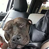 Adopt A Pet :: Dozier - Staunton, VA