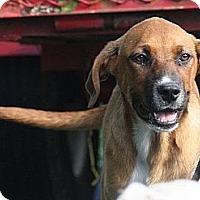 Adopt A Pet :: Lottie - 300$ adoption fee!  L - Staunton, VA