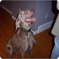 Adopt A Pet :: Stoli - Attica, NY