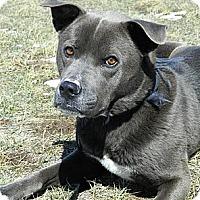 Adopt A Pet :: Nike - Cheyenne, WY