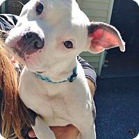 Adopt A Pet :: Loco - Reisterstown, MD