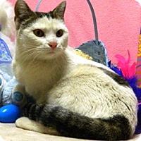 Adopt A Pet :: Clara - Columbus, NE