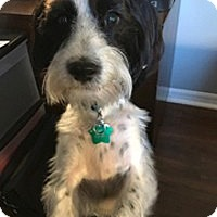 Adopt A Pet :: MAXX - Melbourne, FL