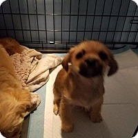 Adopt A Pet :: Peep - Los Angeles, CA