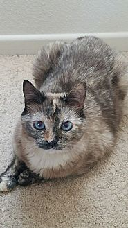 Domestic Shorthair Cat for adoption in Murrieta, California - Kee Kee