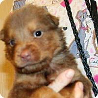Adopt A Pet :: 351965 LF - Wildomar, CA