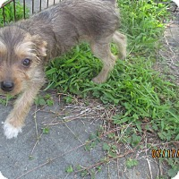 Adopt A Pet :: Sequoyah - West Warwick, RI