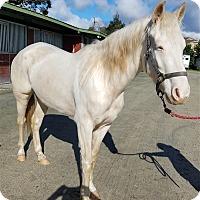 Adopt A Pet :: Athena - Monterey, CA