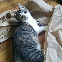 Adopt A Pet :: ABBY - Clayton, NJ