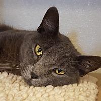 Adopt A Pet :: Ellington - Grayslake, IL