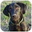 Photo 1 - Labrador Retriever Dog for adoption in Montevallo, Alabama - Maxwell