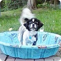 Adopt A Pet :: Sophie (Rillton, PA) - Vansant, VA
