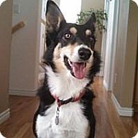 Adopt A Pet :: Molly Bea - Denver, CO