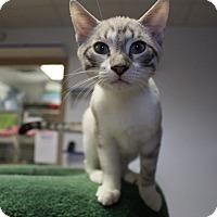 Adopt A Pet :: Paul - Chesapeake, VA