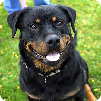 Rottweiler Dog for adoption in Detroit, Michigan - Dee Dee-Adopted!