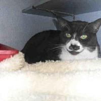 Adopt A Pet :: TOPPER - Santa Maria, CA
