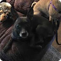 Adopt A Pet :: Tinker - Avon, NY
