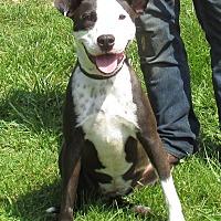 Terrier (Unknown Type, Medium) Mix Dog for adoption in Reeds Spring, Missouri - Carla