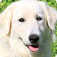 Adopt A Pet :: CHELSEA(GENTLE-SO LOVING!! - Wakefield, RI
